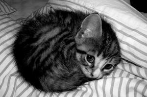 kittenball