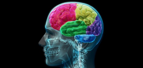 Brain-image-by-Allan-Ajifo-Creative-Commons
